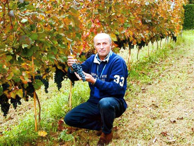 Enzo Mecella photographed amongst his vineyards near Fabriano (AN).