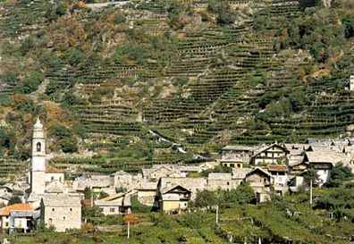 "The steep sloping terraced vineyards, or ""tabbie"", are clearly visible beyond the town of Carema."