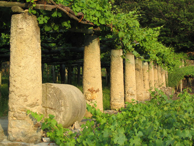 Giant granite columns support the Nebbiolo vines used for Gian Luigi Orsolani's Le Tabbie.