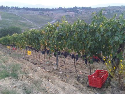 massoferrato vineyards blog